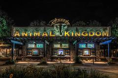 Animal Kingdom | Walt Disney World Resort (Pandry 2015) Tags: disneyworld canondslr canon6d longexposure florida orlando outdoors disneyphotography nightphotography themeparks disneyparks waltdisneyworld wdw animalkingdom