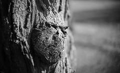 Grumpy (Rene_1985) Tags: sony a7 ii leica 50mm 095 noctilux asph bw sw schwarz weis monochrom