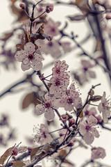 Spring is coming (Ragnarøkkr) Tags: ifttt 500px nikon d7200 tamron18400 bud leaf stem blooming flower head petal flora fragility botanical growth twig plant blossom spring floral pink beautiful flowers