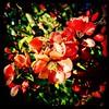It will get warmer. #collegepark #maryland #iPhone #commute #sidewalk #roadside #iPhonemacro #macro  #flower #flowersofinstagram (Kindle Girl) Tags: roadside collegepark maryland iphone commute sidewalk iphonemacro macro flower flowersofinstagram
