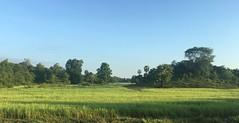 Myanmar, Ayeyarwady Region, Pathein District, Pathein Township, Moe Goke Village Tract (Die Welt, wie ich sie vorfand) Tags: myanmar burma bicycle cycling ayeyarwadyregion ayeyarwady irrawaddy delta patheindistrict pathein patheintownship moegoke