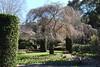 Filoli Gardens near San Francisco (March *2018*) (rootcrop54) Tags: hyacinth bare branches tree hedge topiary nature filoli gardens early20thcentury march 2018 vacation sanfrancisco california