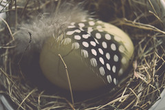 we always hide our broken side (Ayeshadows) Tags: cracked macro monday broken egg feather