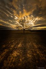 ______!______ (AvideCai) Tags: avidecai arbol paisaje canon1635 nubes cielo atardecer vertical