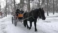 Horse at Skansen in Stcokholm, Sweden 18/1 2018. (photoola) Tags: stockholm skansen vinter djur häst djurgården horse snow winter photoola sweden