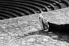 Mon abécédaire en photo - I comme Inactif (OMM.photographie) Tags: canon 5d eos extérieur outside outdoor monochrome converse nb bw noiretblanc noirblanc blackandwhite blackwhite canon5d canoneos5d canon5dmarkiv canoneos5dmarkiv