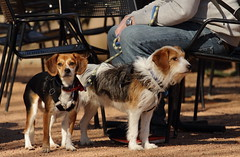 Dog Days '18, Morton Arboretum. 7 (EOS) (Mega-Magpie) Tags: canon eos 60d outdoors the morton arboretum lisle dupage il illinois usa america pet cute dog puppy people person