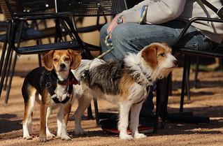 Dog Days '18, Morton Arboretum. 7 (EOS)