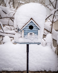 Neighbor's House, Brunswick, Maine (86662) (John Bald) Tags: maine bird birdhouse blizzard bluehouse cold comical outside snow winter