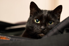 Lilli (rengawfalo) Tags: lilli katze tier haustier augen eyes cat kitten pet animal black