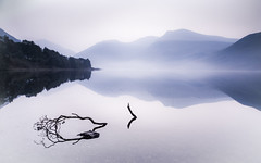 Morning mist! (Nathan J Hammonds) Tags: lake district cumbria uk england wastwater mountains water foreground mist morning still long exposure nd filter 10stop nikon d750 reflection branch trees beautiful calm landscape