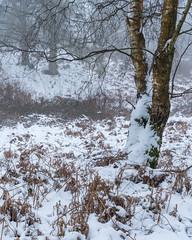Greenham Common Winter - II (J R Oliver) Tags: berkshire england greenhamcommon snow winter