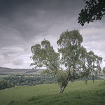 Tree and Clouds thumbnail