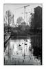 Paris (Punkrocker*) Tags: leica m5 summicron asph 35mm 352 film ilford pan 400 nb bwfp street city garden people paris park martinlutherking france
