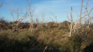 tree skeletons (2)