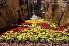 Temps de flors_0223 (Joanbrebo) Tags: girona catalunya españa es tempsdeflors tempsdeflors2017 canoneos80d eosd efs1018mmf4556isstm autofocus magicmomentsinyourlifelevel3 magicmomentsinyourlifelevel4