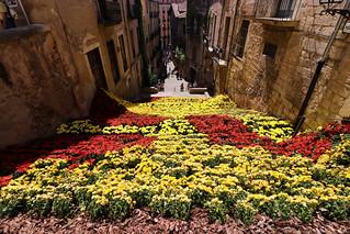 Temps de flors_0223