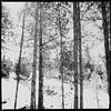 The Trees - by Rush (f l a m i n g o) Tags: hipstamatic lyrics rush band music thetrees words 27585