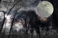 Sol y Luna (seguicollar) Tags: artedigital árbol artecreativo ramas hojas leaf leaves luna cielo copas troncos bosque sol