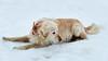 Humans best friend (Ernst_P.) Tags: aut inzing österreich tirol tier säugetier hund dog perro animal sony 16105mm