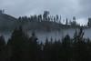 Olympic National Park (elisecavicchi) Tags: olympic national park washington wa pacific northwest pnw fog peak sitka spruce sky storm cloud