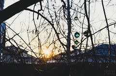 Day 120 | Back Yard Dawn