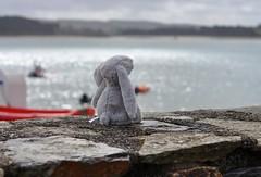 """Madame Rêve..."" (The Blue Water Lily's Company) Tags: fdrouet nikon lapin rabbit mer sea bokeh"