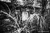 Forgotten (Andrea Trucchia) Tags: photo cimitero riposo italia 3ds alberi black toscana nikon paesaggio barberinovaldelsa blackandwhite photography cimitery persone andreatrucchia white