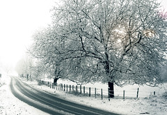 WINTER (Alexandra Kfr) Tags: nature trees black blackandwhite yellow light road cold snow winter landscape countryside fence contrast
