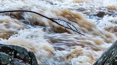 Mörrumsån vattenflöde (tonyguest) Tags: mörrumsån vattenflöde mörrum river full flood tonyguest blekinge sverige sweden stockholm water ice rocks 16x9 blur movement flow