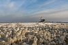 Paard van Marken - Marken, The Netherlands (Dutchflavour) Tags: marken paardvanmarken nederland netherlands ice iceformations frozen winterwonderland winter seascape lighthouse vuurtoren horseofmarken goldenhour lowsunlight dutch waterland landscape seaside ijsselmeer markermeer