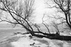 diemerzeedijk (hansfoto) Tags: amsterdam muiden diemerzeedijk ijmeer frozen lake ice