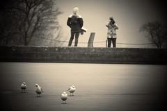 Schönbrunner Schloss (la fontana ghiacciata 2) (Enrico Piolo) Tags: acqua dolce ghiaccio uccelli fontana persone bianconero