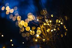 (JuNu_photography) Tags: bokeh light ribbon bush winter dark darkness