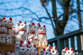 來歐! Come! / Tokyo, Japan