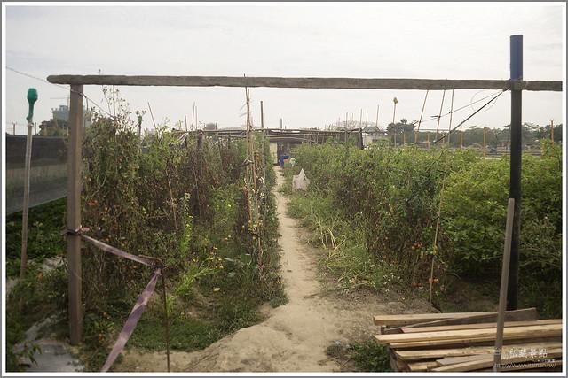 善化草莓 來去晴空農場找無農藥栽種的草莓 (18)