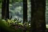 fallen (klaus.huppertz) Tags: neuschönau wald forest bayerischerwald nationalpark holz stamm baum tree trunk moos moss natur nature outdoor nikon nikond750 d750 tele 300mm nikkor wood grün green nikonafsvrnikkor300mmf28gifed nikkor300mm28 300mmf28gvrii plants pflanzen nikonafsnikkor300mmf28gedvrii