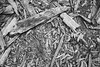 Wood Chunks in Sequoia National Park, California (thedot_ru) Tags: ground lookingdown wood trees planks chunks sequoia nationalpark california adventure wanderlust travel travelling travels blackandwhite monochrome nature bw usa america canon5d 2014