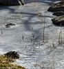 Untitled (FotoRoar2013) Tags: 2018 februar vinter fotoroar2013 canon 5dmk3 ice norway norwegen noruega norge norvegia nature natur norwege norvege frozen rogaland rc