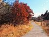 A Walk (berrywine) Tags: paths
