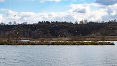 Birds (Marc Torfs) Tags: france paysage ciel pleinair oiseau mouette hiver nuage eau éclusiervaux nordpasdecalaispicardie fr