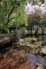 (Eddy_TW) Tags: 灣 taiwan 台中市 taichung 武陵農場 武陵 wuling wulingfarm 楓葉 楓 fall autumn