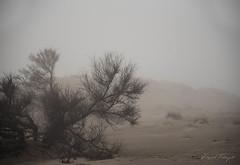 Boira al Fangar (rfabregat) Tags: boira beach delta fangar marquesa mediterrani mediterraneo mediterranean deltadelebre deltebre tarragona catalunya catalonia landscape duna fog arena sorra sand