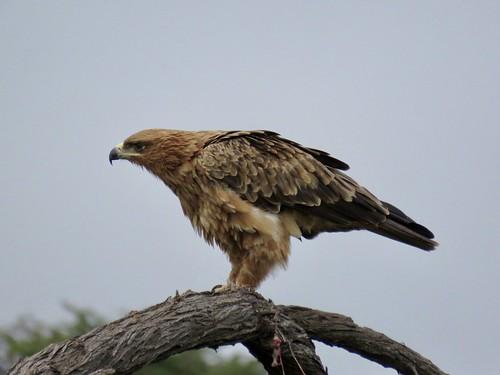 Birding - Hwange - Zimbabwe 2018