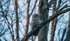 Barred Owl (Jacob Valerio) Tags: jake valerio jacob nikon d800 barred owl