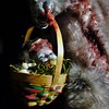 Easter basket surprise! (tishpitt1) Tags: thebunnyman bunnyman bunny rabbit horrordoll easterbunny easterbasket deadhead dollhead altered handmade handpainted scary horror fear frightening nightmare gory blood bloody severedhead panasonicgf1