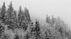 Tempête...1 (Mare Crisium) Tags: mountain montagne snow neige sapin fir noirblanc blackwhite alpes alps tempête tempest
