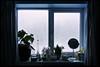 9th of December 2017 (Paul of Congleton) Tags: diary december 2017 myeverydaylife bathroom window windowsill interior home domestic cold winter digital sony rx100