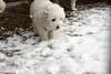 Incasciata in Cascina 10100 (Valiena) Tags: cascina diecicento neve snow cani puppies cuccioli sweet cuties