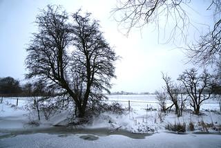 Frozen Fairbottom